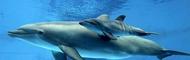 Роды с дельфинами становятся все популярнее
